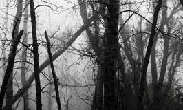 пуща ноябрь тумана стоковые фото