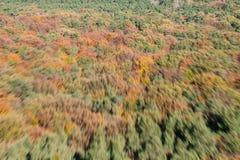 Пуща осени взгляда полета Стоковое Изображение RF