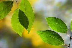 пуща осени выходит сосенка к древесине Стоковые Изображения RF