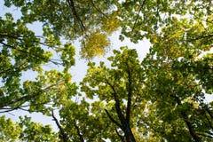 пуща осени красивейшая Стоковое Фото