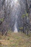 пуща осени красивейшая Стоковое фото RF