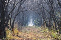 пуща осени красивейшая Стоковая Фотография RF