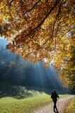 Пуща с лучем солнца в осени Стоковая Фотография