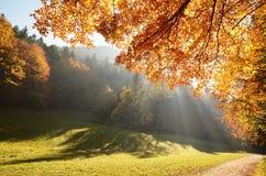 Пуща с лучем солнца в осени Стоковое фото RF