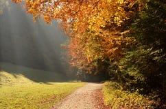 Пуща с лучем солнца в осени Стоковые Фотографии RF