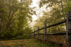 пуща осени цветастая выходит пейзаж Стоковое фото RF