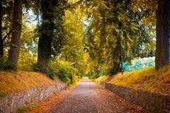 пуща осени цветастая выходит пейзаж стоковые изображения