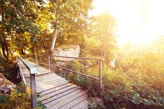 пуща осени цветастая выходит пейзаж Стоковая Фотография