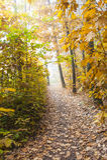 пуща осени цветастая выходит пейзаж Стоковое Изображение