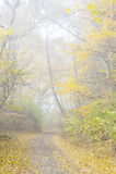 пуща осени цветастая выходит пейзаж Стоковые Фото