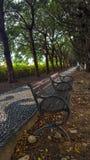пуща осени цветастая выходит пейзаж Стоковое Фото