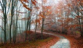 пуща осени цветастая выходит пейзаж Стоковые Изображения RF