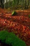 пуща осени Стоковое фото RF