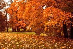 Пуща осени Стоковые Фото