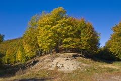 пуща осени Стоковая Фотография