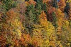 Пуща осени в горе Стоковые Изображения RF