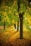пуща осени sunlit Стоковое Изображение