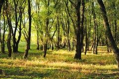 пуща осени sunlit Стоковое фото RF