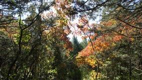 пуща падения цвета стоковое фото