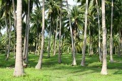 Пуща пальм стоковые фотографии rf