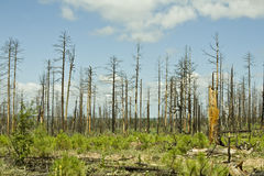 пуща пожара Аризоны стоковое фото