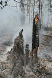 пуща пожара Стоковые Изображения RF