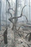 пуща пожара Стоковое Фото