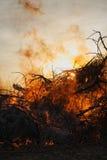 пуща пожара стоковое фото rf