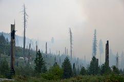 пуща пожара Стоковое Изображение RF