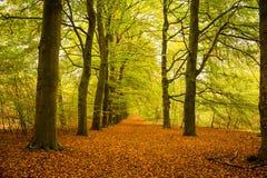 Пуща покрашенная осенью Стоковые Изображения