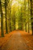 Пуща покрашенная осенью Стоковые Фотографии RF