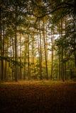 Пуща покрашенная осенью Стоковое Изображение RF