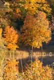 Пуща покрашенная осенью Стоковая Фотография RF
