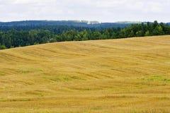 пуща поля осени около стерни Стоковая Фотография RF