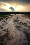 Пуща почвы стоковое фото