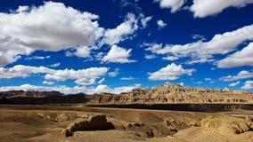 Пуща почвы стоковая фотография