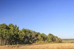 пуща поля ближайше Стоковые Фотографии RF