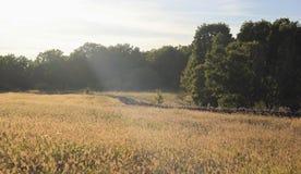 пуща поля ближайше Стоковые Изображения RF