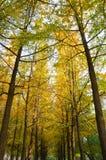 пуща предпосылки осени Стоковое Фото