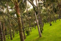 пуща предпосылки тропическая Стоковые Изображения