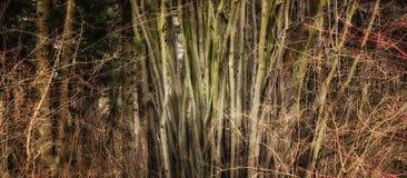 пуща предпосылки красивейшая Стоковое Фото