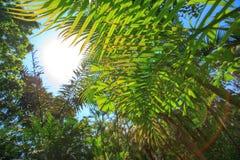 пуща предпосылки тропическая Стоковые Фотографии RF