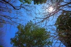 пуща предпосылки тропическая Стоковое Изображение RF