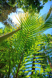 пуща предпосылки тропическая Стоковая Фотография