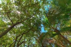 пуща предпосылки тропическая Стоковая Фотография RF
