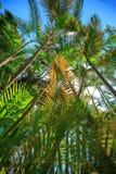 пуща предпосылки тропическая Стоковые Изображения RF