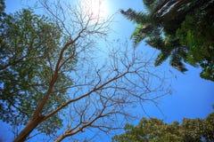 пуща предпосылки тропическая Стоковое Изображение