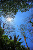 пуща предпосылки тропическая Стоковые Фото