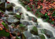 пуща ручейка меньшяя гора Стоковое Изображение