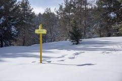 Пуща снежка Стоковые Изображения RF